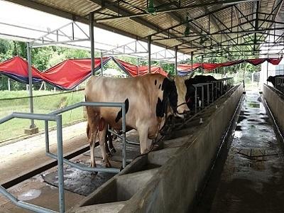 Golden Harvest Dairy Ltd Golden Harvest